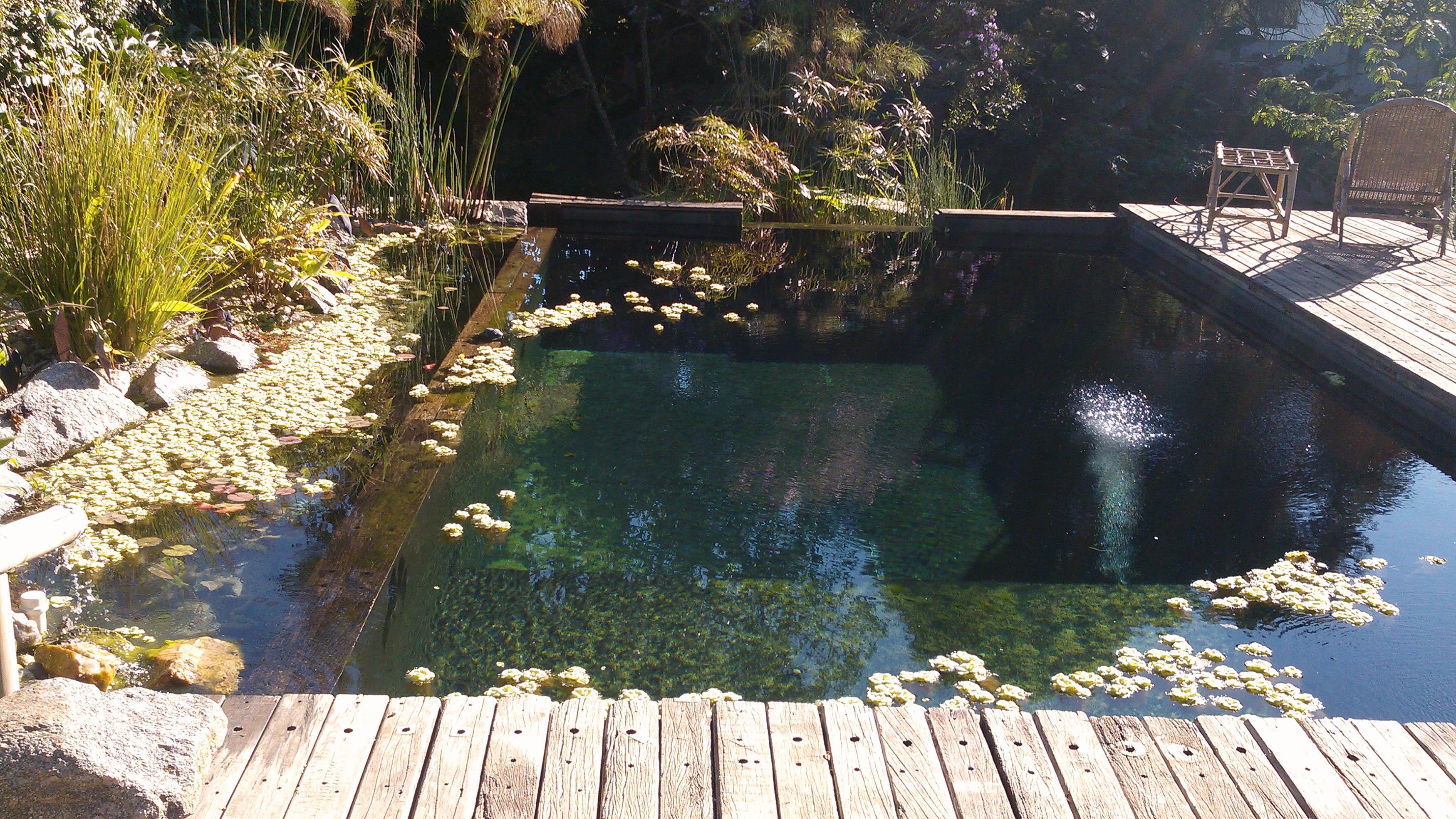 Bionatare piscinas biol gicas piscinas naturais for Piscinas biologicas